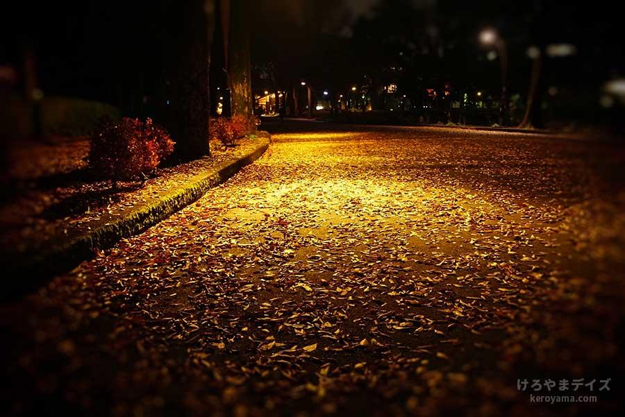 落ち葉を照らす灯り